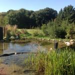 Filtergraben mit Flachwasserzone