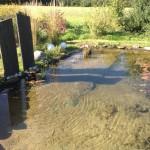 Flachwasserzone